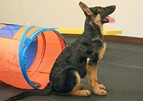 Perfect Pet Dog Training