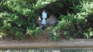 Perfect Pet Dog Training